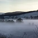 A Misty Morning by Lynne Morris