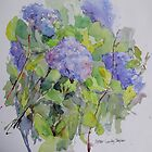 Hydrangea by Peter Taylor