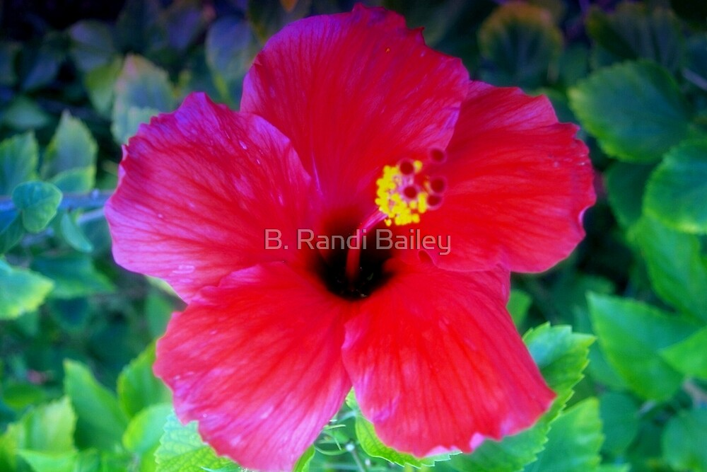 Hibiscus happiness by ♥⊱ B. Randi Bailey