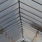 Ceiling Ribs by Lynn Wiles