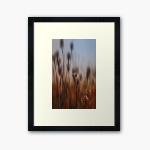 A pod the wind Framed Art Print