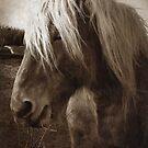 Blondie by Chris Cardwell