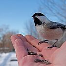 A Bird in the Hand - the Birds of Cooper Marsh by Mike Oxley