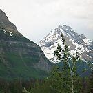 Montana Scenic Drive by DeBorah Davis, LMT