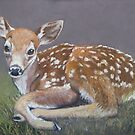 White tailed fawn. by Norah Jones