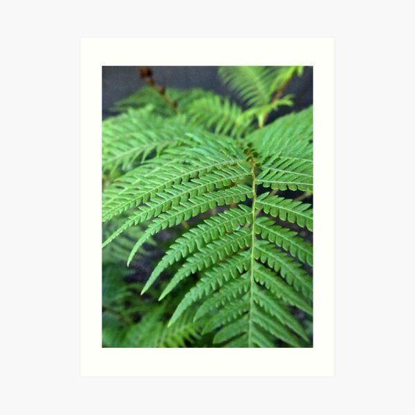 Fern in the Forest Art Print