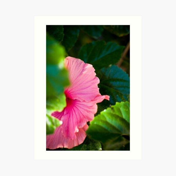 Bashful Bloom Art Print