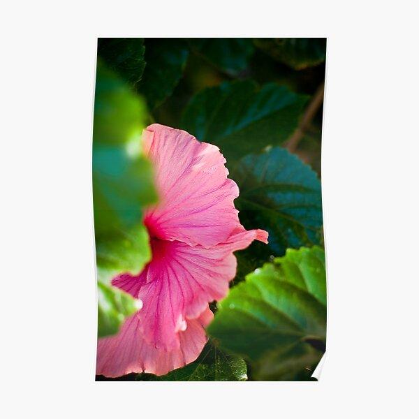 Bashful Bloom Poster