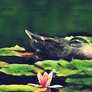 Quack in Frac by oddoutlet