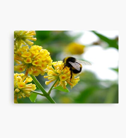 Bee #5 Canvas Print