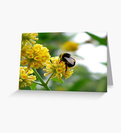 Bee #5 Greeting Card