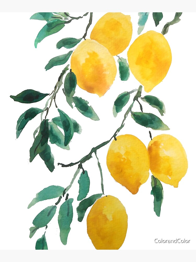 yellow lemon watercolor  by ColorandColor