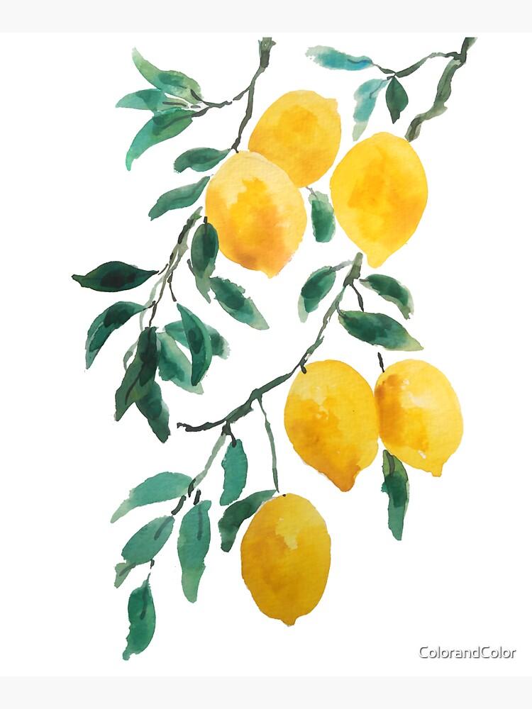 yellow lemon watercolor  by ColorandColor
