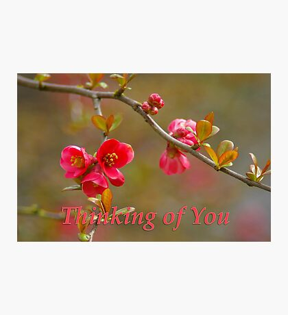 quince 'thinking of you' Photographic Print