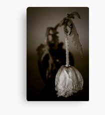 Wilting Poppy Canvas Print