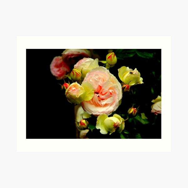 Black Bouquet Art Print