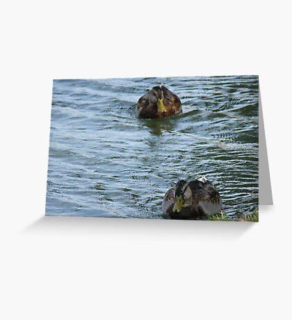 Ducks In a Row Greeting Card