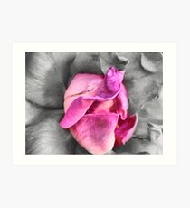 colour select rose Art Print