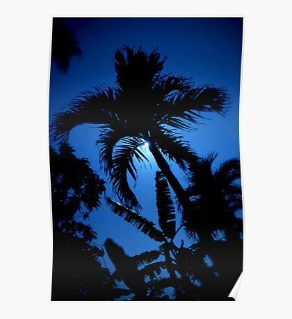 Moonlit Palm Poster