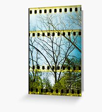 Convergence Of Branches Greeting Card