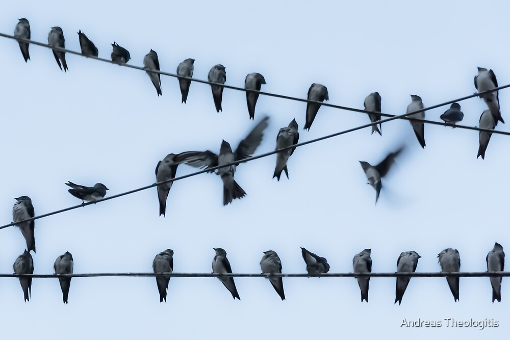 Wired Birds by Andreas Theologitis