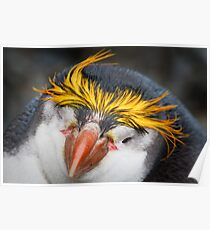 Royal Penguin Poster