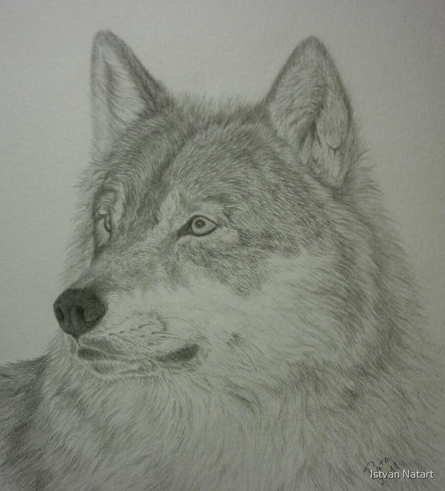 The Predator.......wolf portrait by Istvan Natart
