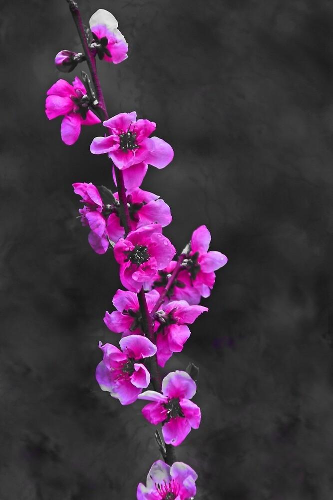 Pink Flowers by Lauren Holmes