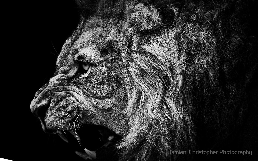The King by Damian  Christopher Photography