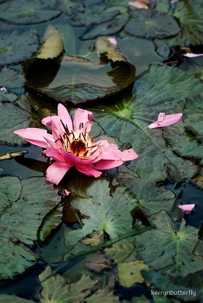 Floating away - Botanical Gardens Brisbane by kerrynbutterfly