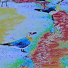 birds by NVJasmin