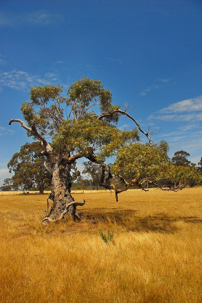 Old Tree Victoria by Lauren Holmes