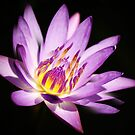 Lovely Lily by Kym Howard