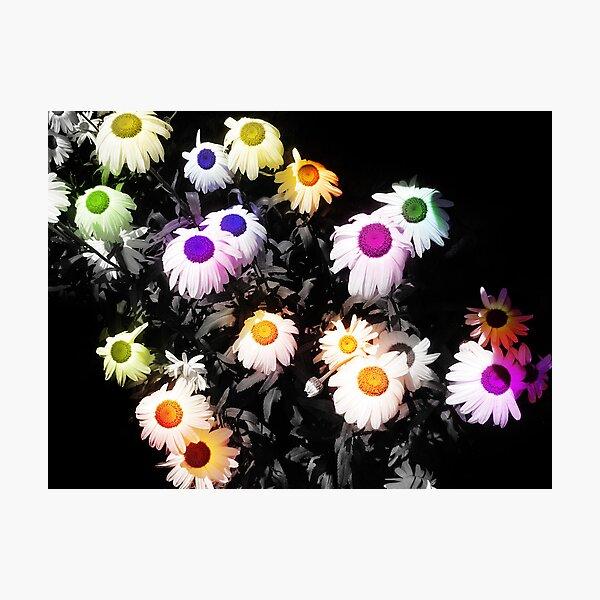 Black Polychromatic Photographic Print