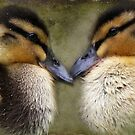 """""""The Look of Love ..."""" by Rosehaven"""