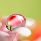 Pretty Pastel by Sharon Johnstone