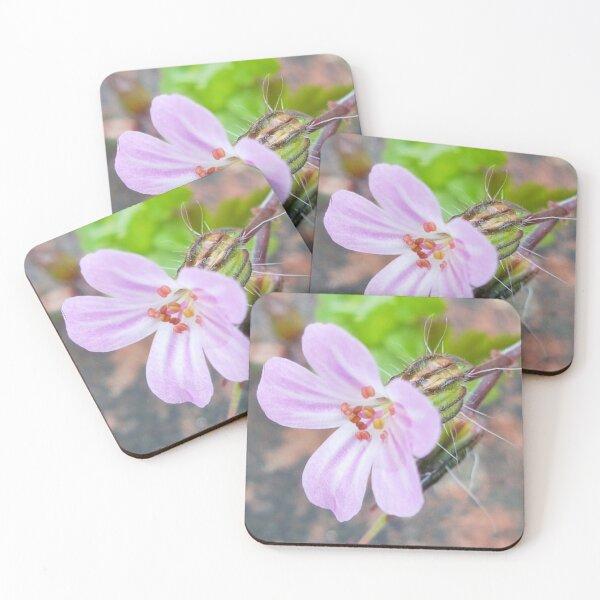 Herb Robert Coasters (Set of 4)