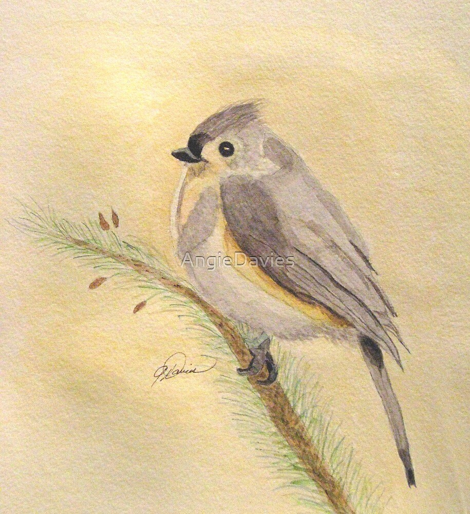 A Tufted Titmouse by AngieDavies
