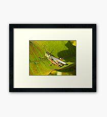 Armour Plated Hopper Framed Print