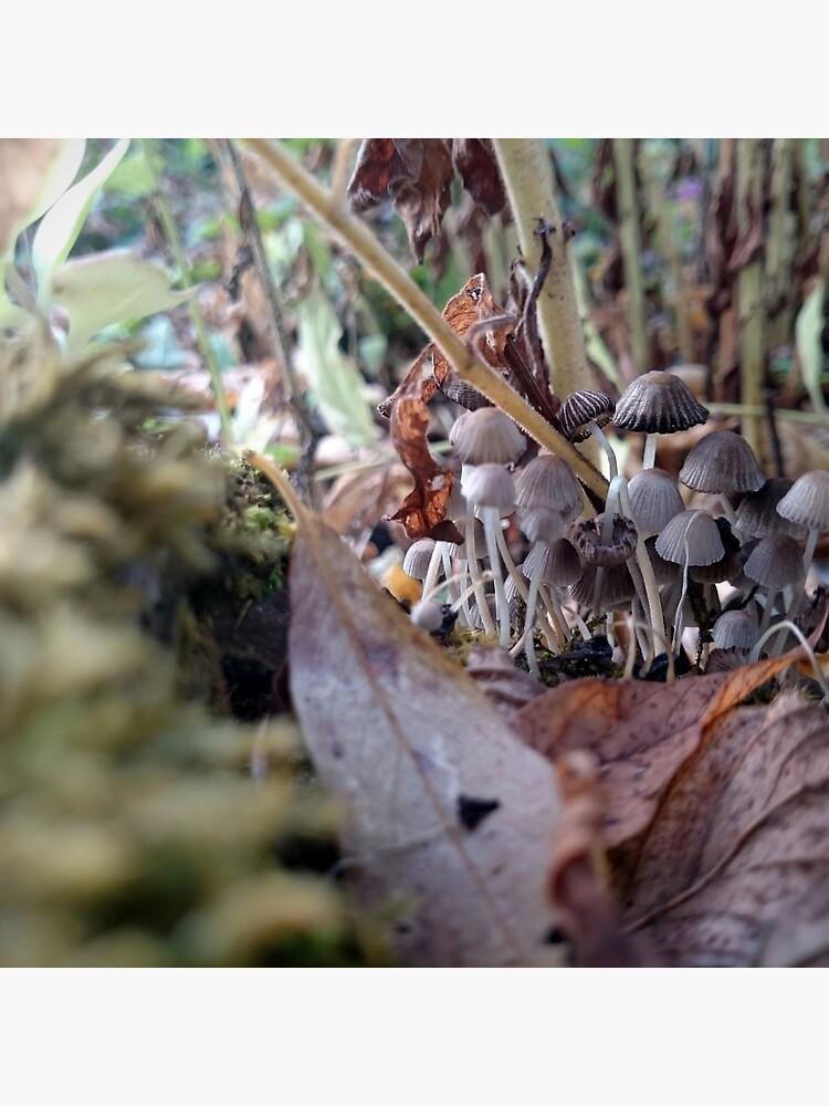 Kleine Pilze von Gourmetkater