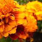A sea of orange. by kirstea1990