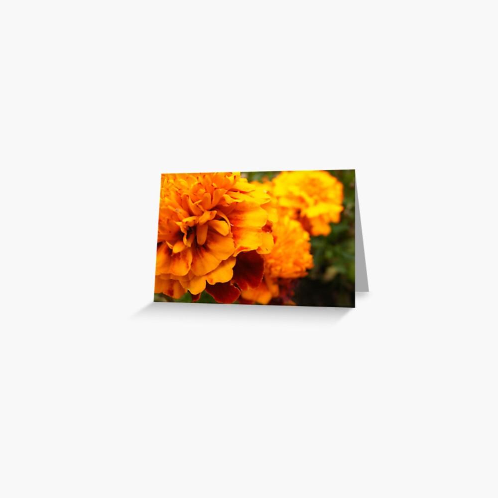 A sea of orange. Greeting Card