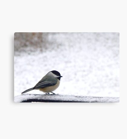 Cold but Cute Chickadee 1 Metal Print