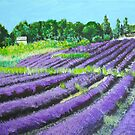 Lavender Provence by Heberto   G. Cavazoz