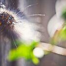 Caterpillar bokeh by Julia Goss