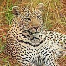 Georgous big cat by jozi1