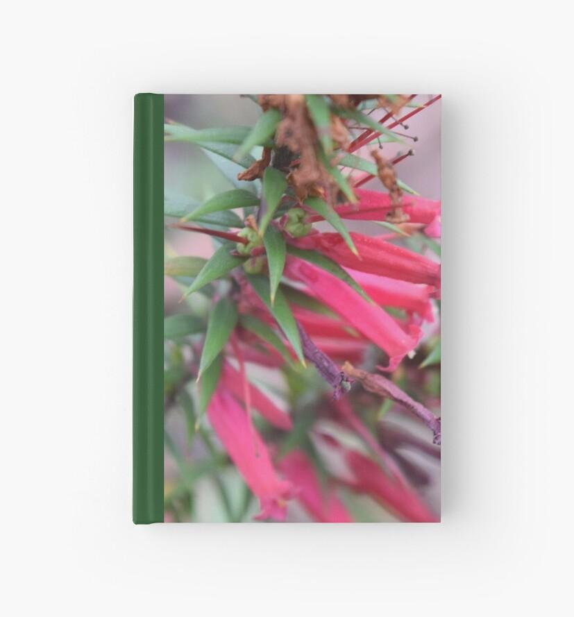 Pink Heath by Caroline Everett