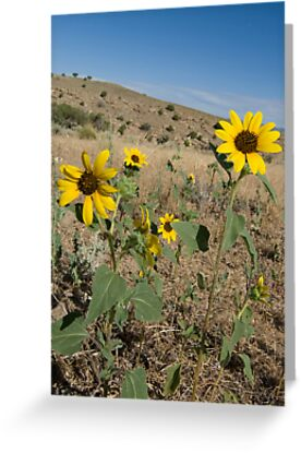 Yellow Desert Flowers Arizona And Utah Greeting Cards By Akrolith