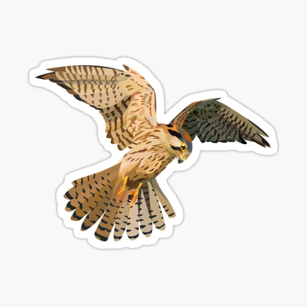 Female American Kestrel Sticker