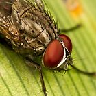 Diptera by Jason Asher